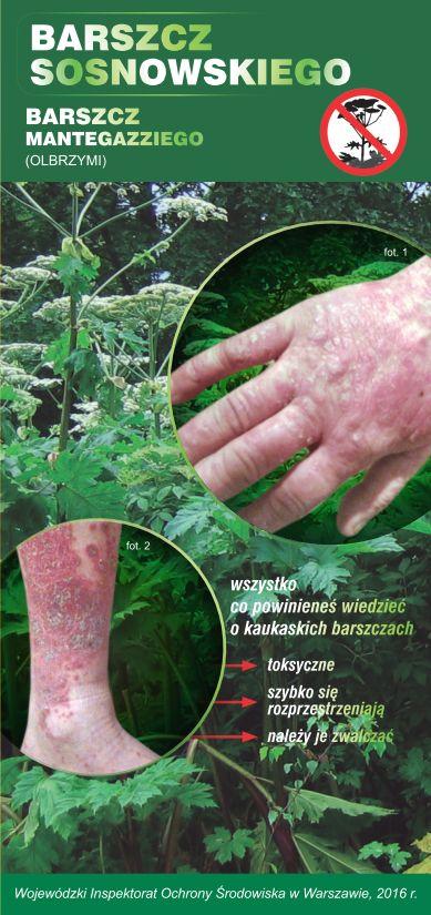 Ulotka - Barszcz Sosnowskiego i barszcz Mantegazziego